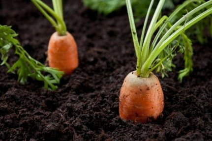 easiest-vegetables-to-grow-at-home1376372302-aug-11-2012-1-600x400