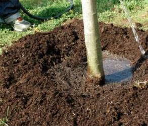 watering-trees