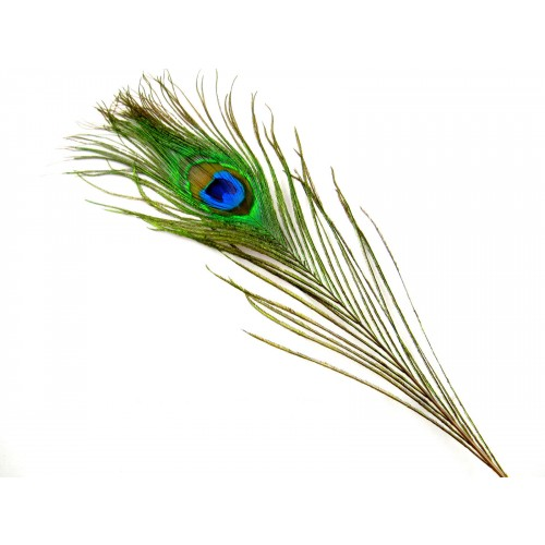 peacock-feathers