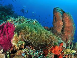 Salah Satu Situs Menyelam Yang Terkenal Disini Adalah Taman Nasional Wakatobi Dengan Tingkat Keragaman Terumbu Karang