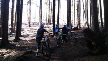 mountain biking, kona, ibis, specialized, orange, sun coming through the pine forest, redlands in surrey