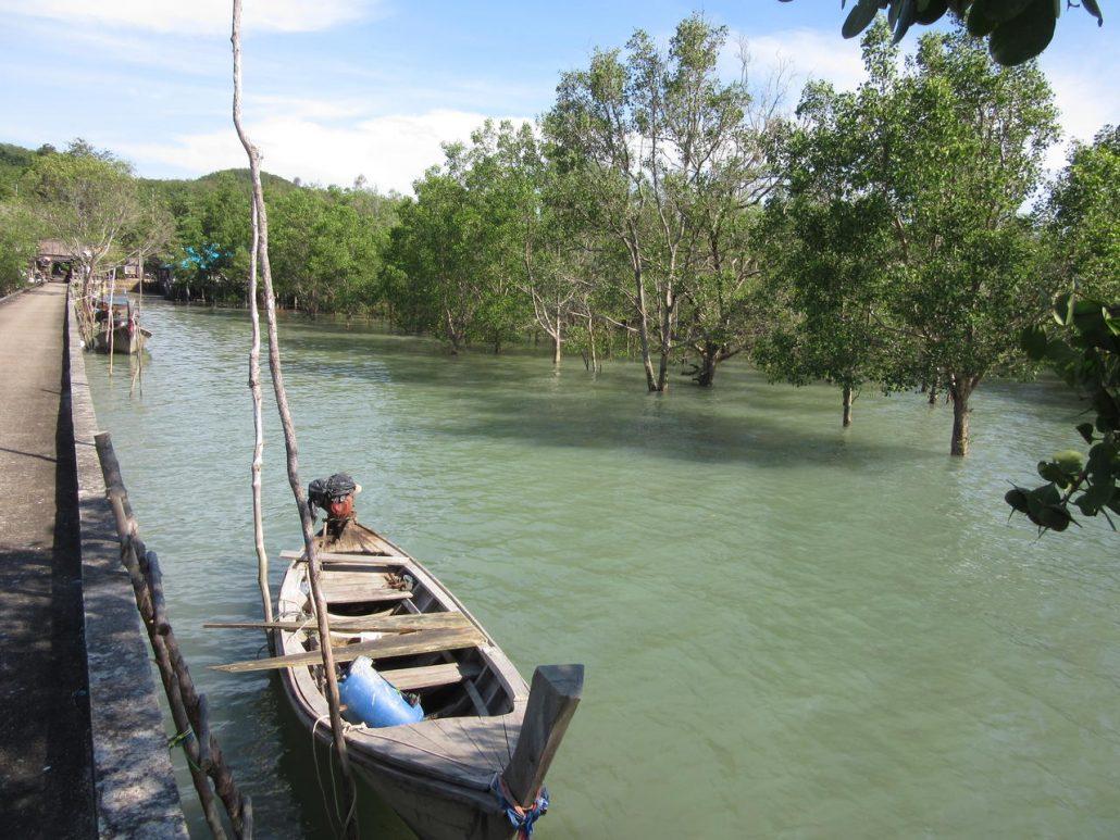 Koh Yao Noi mangrove swamp