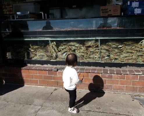 Watching live crab at Redondo Pier CA