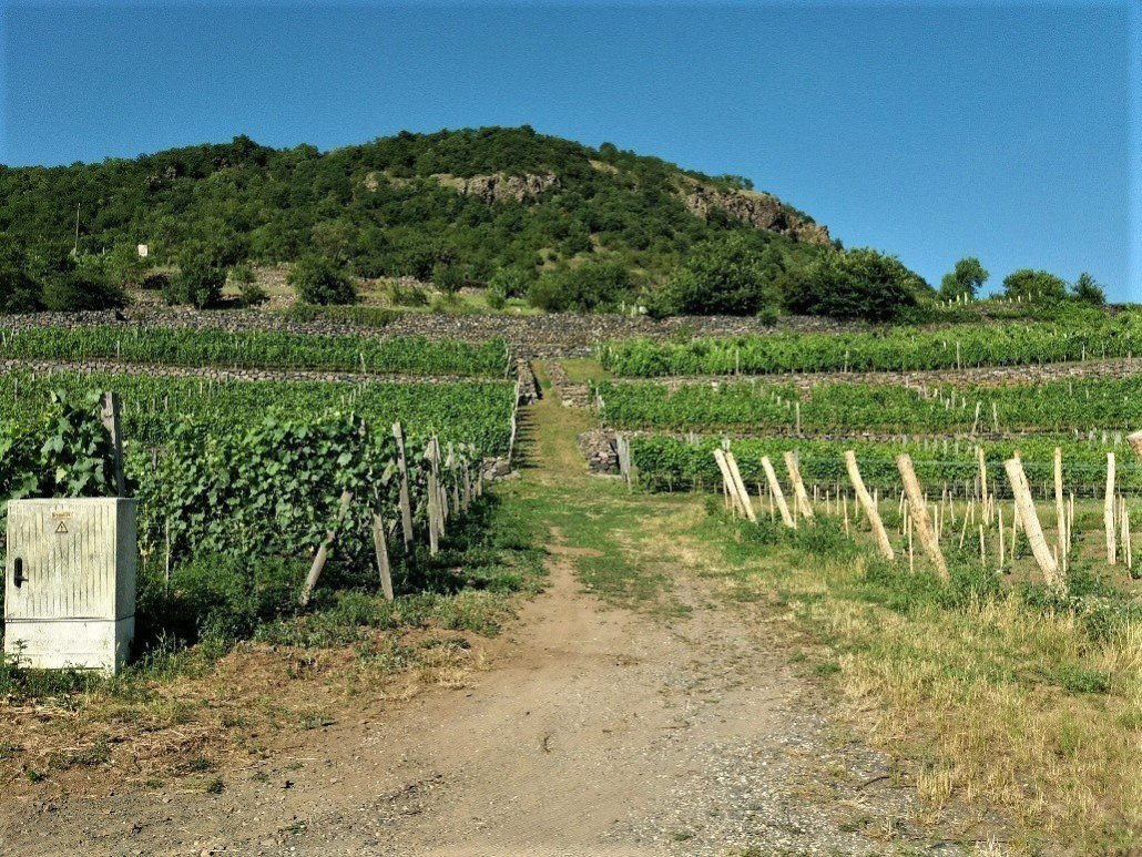 Vineyards at Somlóhegy