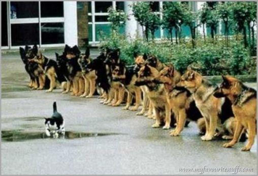 IDGAF, doggies.
