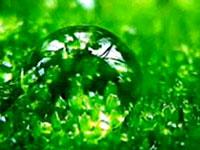Any Site - Психология цвета. Зеленый цвет – жизнь, рост ...