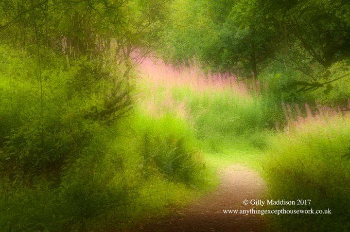 stour woods