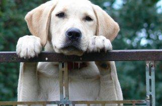 book-review-of-tara-the-dog