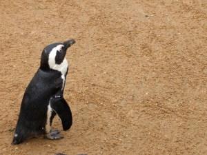 Penguin!!!