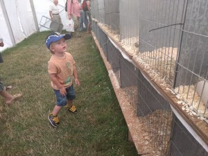 L checking out the rabbits at the Wayland Show
