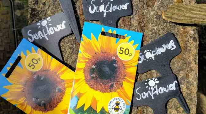 The Sunflower Growing Challenge from GBC Group