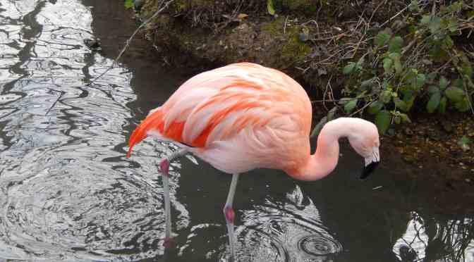 Make Easter Braziliant at Amazona Zoo!