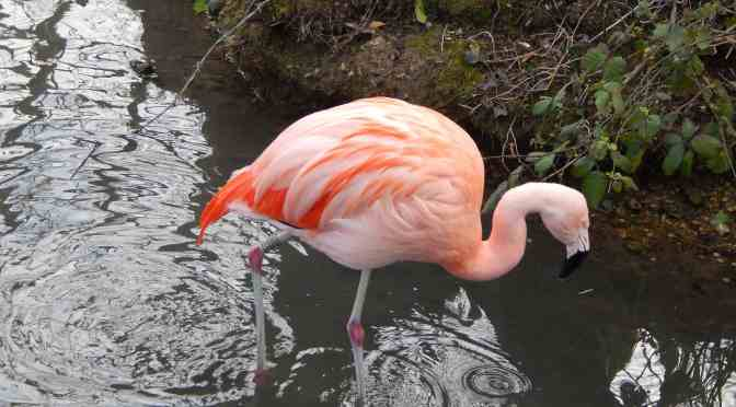 Make Easter Braziliant at Amazona Zoo!