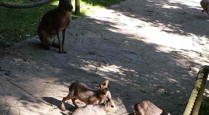 Amazona Zoo Celebrates New 'Lock Down' Births