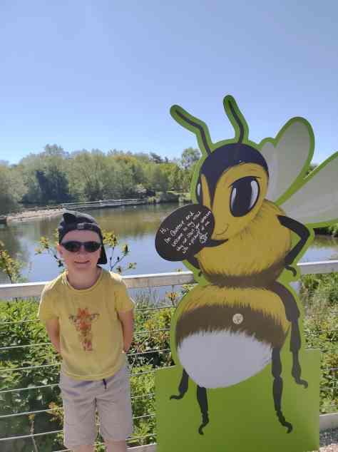 Bee Wild at Pensthorpe