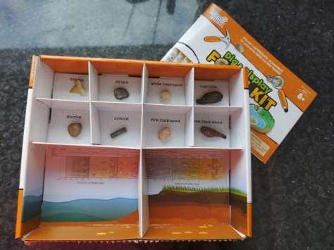 Dig & Display Fossil Kit