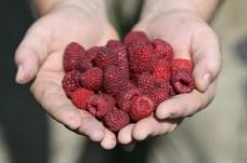 Egri Berry