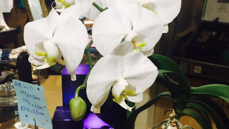 胡蝶蘭も春を迎えています♥3月21日(火)は定休日です。22日(水)は12時よりオープン致します。