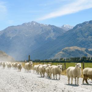 *New Zealand