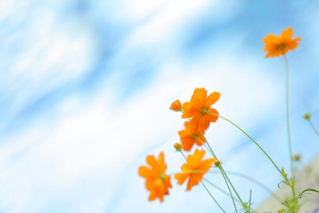 空に向かって誇らしげに咲く花