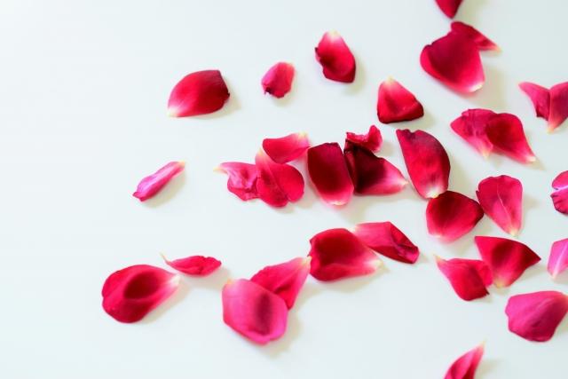 散った赤いバラの花びら