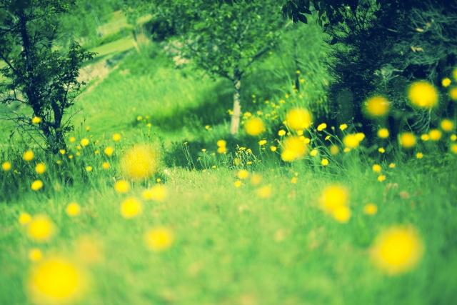 緑に映える黄色い花