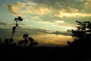 Black Plants at Sunset. Photo (cc) Tambako the Jaguar