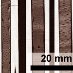 High-resolution proxies for wood microdensitometry
