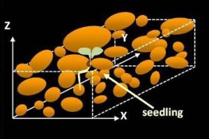 Modelling germination and emergence of Medicago