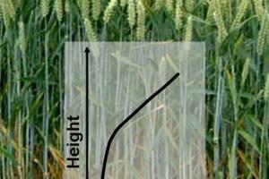 Simulating nitrogen economy of wheat plants