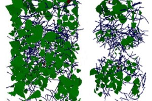 Simulating grazing of a 3-D sward canopy