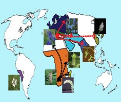 Biogeography of subfamily Hyacinthoideae