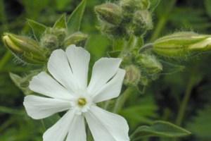 Habitat specialization through germination cueing