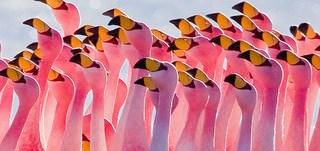 Flamingos Partying by Pedro Szekely