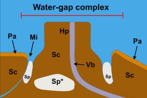 Water-gap complexes in species with physical dormancy