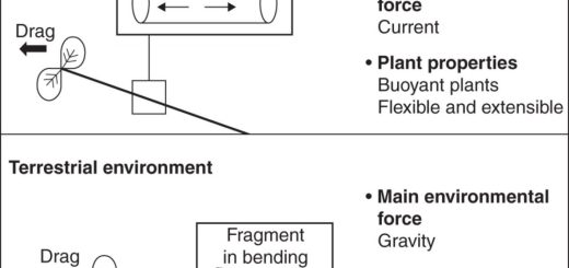 Diagram of forces on aquatic and terrestrial plants