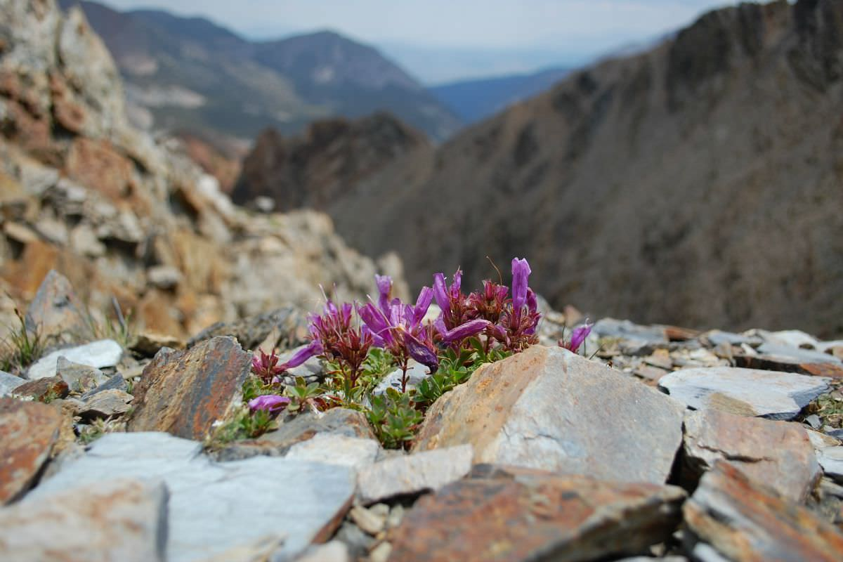 Endemism Hotspots as Climate Change Refugia: A Special Issue of  Annals of Botany