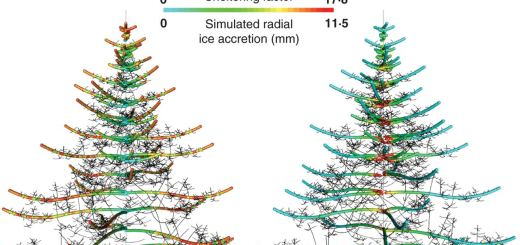 Simulated tree from a functional–structural modelling suite.