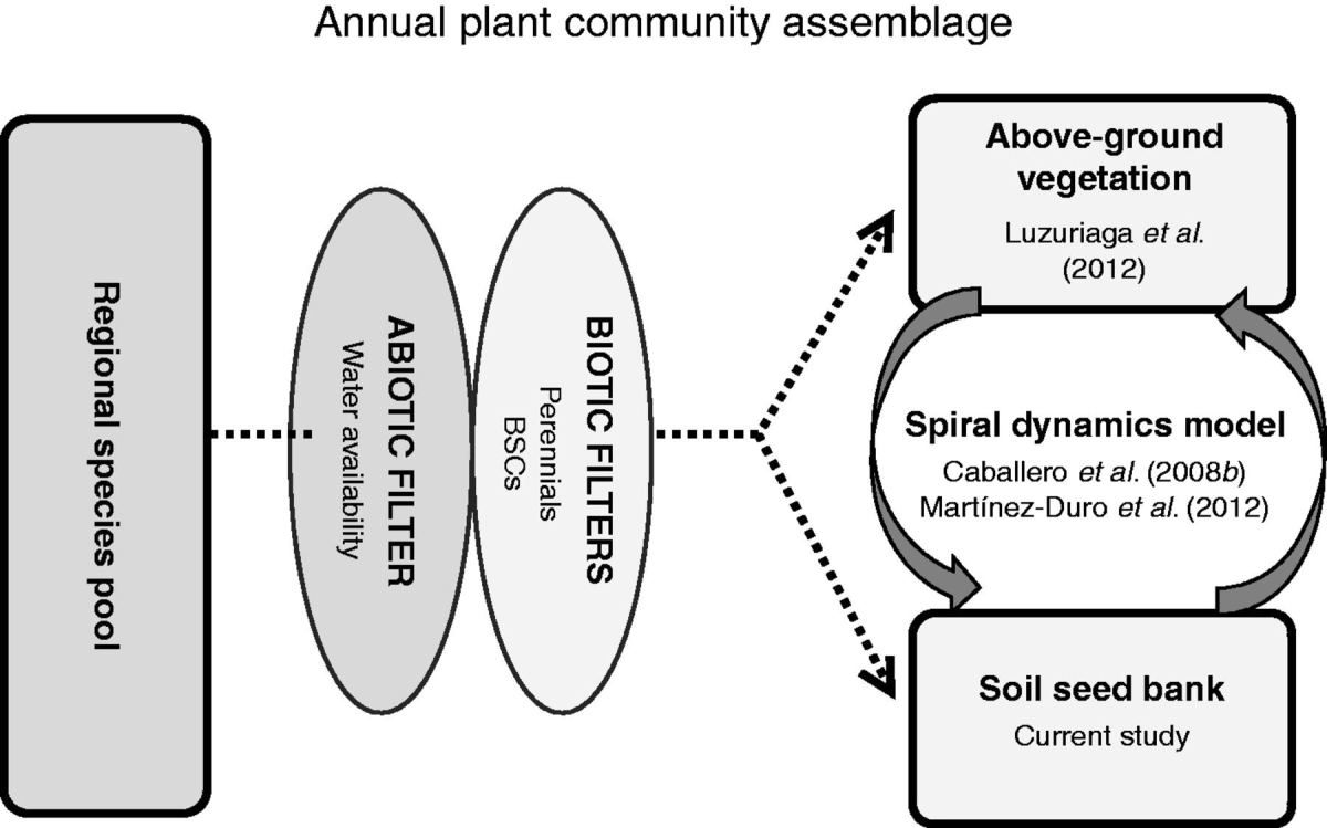 Soil seed bank assembly at multiple scales