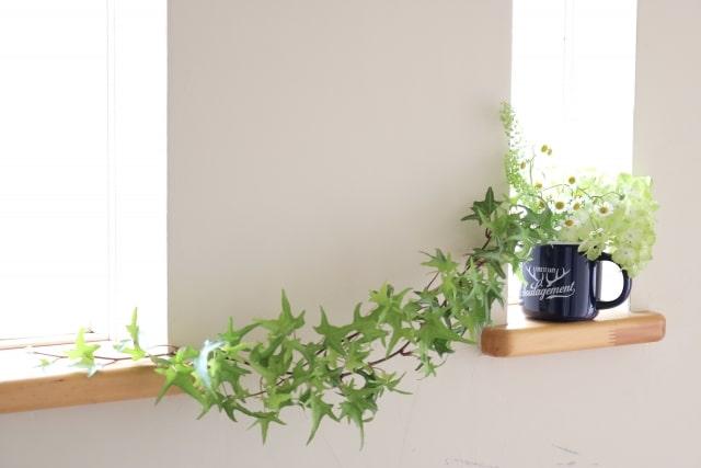 玄関に置くといいもの 植物