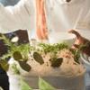 横浜ベイホテル東急 青森の恵みをディナーブッフェで 「ナイト・キッチンスタジアム ~こだわり食材・青森」2015/9/1~10/12