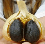 青森県 黒ニンニクに脚光、ラッキョウ、ゴボウ 食べやすく抗酸化作用増 (2016/1/14)