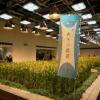 3月22日 東京大手町でなんと稲刈りイベント開催!青森のブランド米です。行きましょう!