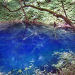 白神山地の「世界自然遺産 青池」の青い色の謎がとけた!?