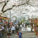「さんのへ春まつり2018」開催!4月27日~5月5日