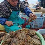 野辺地町「トゲクリガニ漁盛ん」青森県の花見の味覚/@2019年4月13日