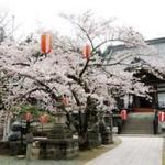 青森「南部町春まつり」開催!@2019年5月3日~4日