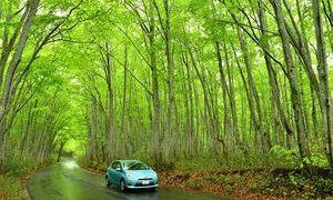 八甲田の国道「新緑のトンネル」鮮やか