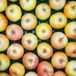 五所川原市のりんご「トキ」を台湾で販売へ