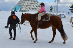 The horses are well-accustomed to the snow